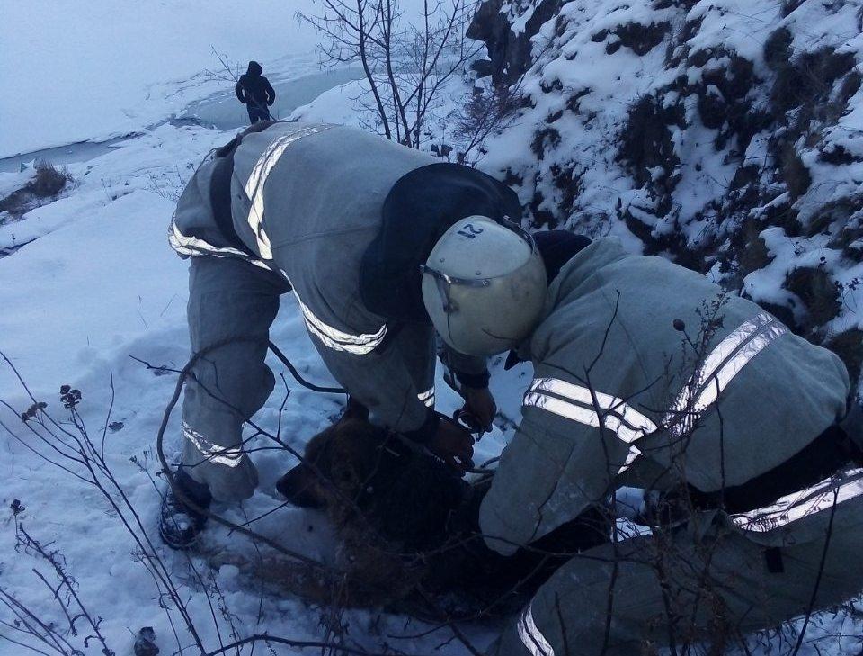 На Кіровоградщині ледь не втонув песик (ФОТО)