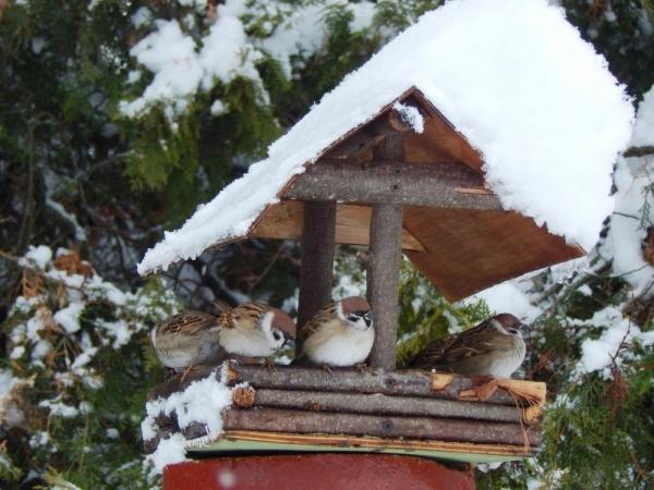 У дендропарку на Кiровоградщинi допомагають птахам перезимувати (ФОТО)