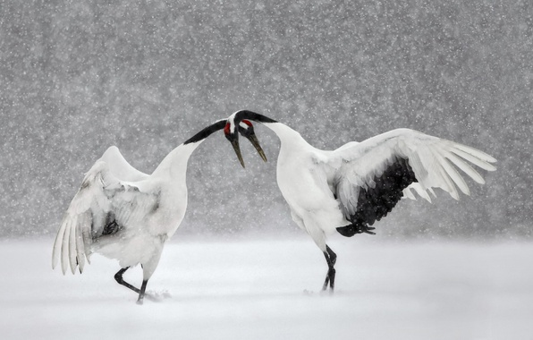 Життєві історії. Зимове танго