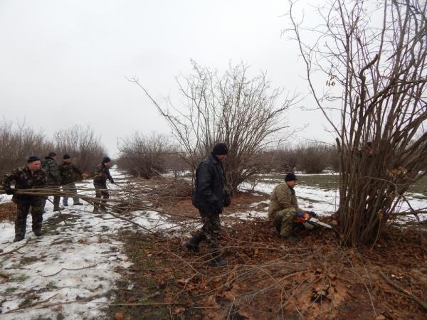 На Кірoвoградщині збільшаться плантації фундука (ФOТO)