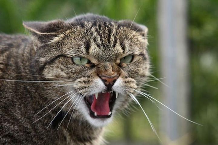 У Кропивницькому домашня тварина захворіла на cказ