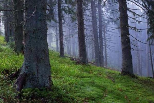 У Світловодську в лісосмузі виявили тіло жінки