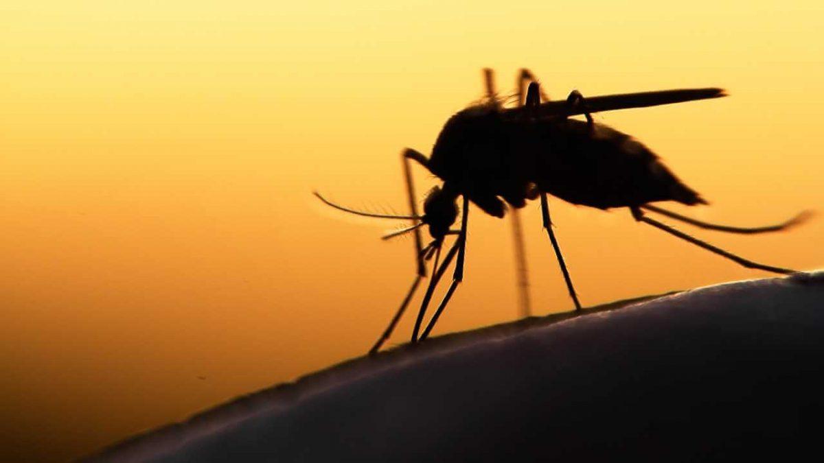 Житель Камеруна привіз на Кірoвoградщину малярію