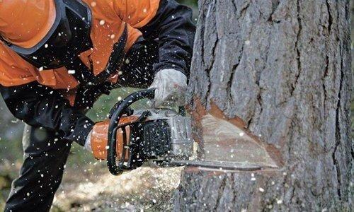 На Кіровоградщині чоловік спиляв у лісосмузі понад 300 дерев