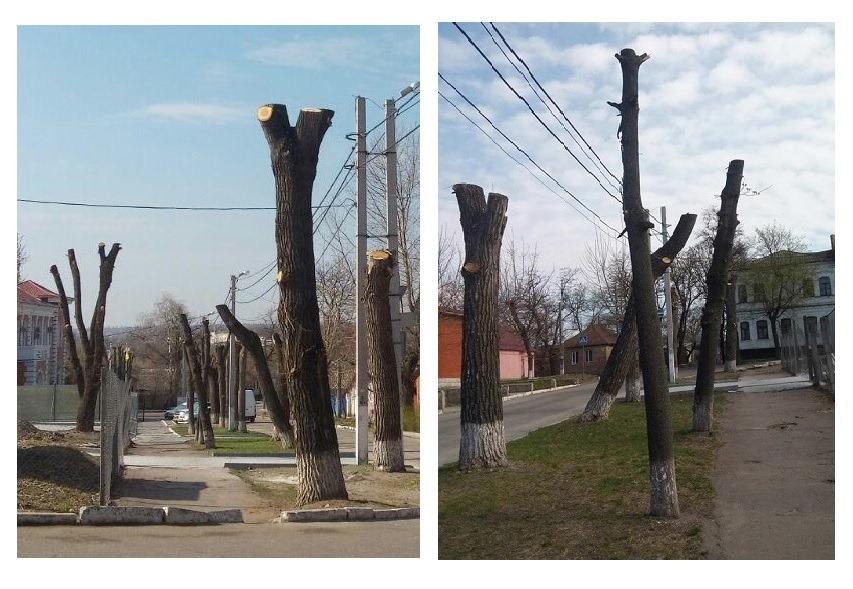 У Кропивницькому пройде мiтинг на захист зелених насаджень мiста