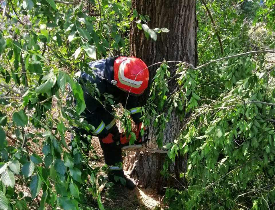 На Кiровоградщинi рятувальники двiчi надавали допомогу по прибиранню аварiйних дерев (ФОТО)