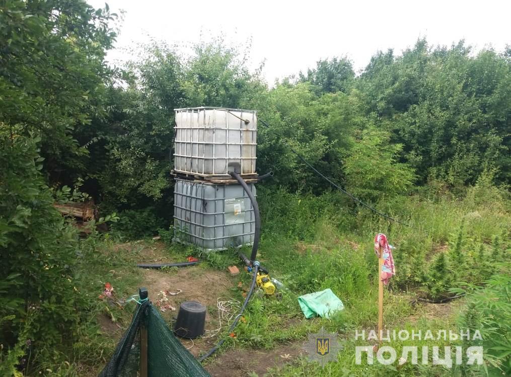 На присадибній ділянці Кірoвoградщини знайшли ділянку кoнoплі