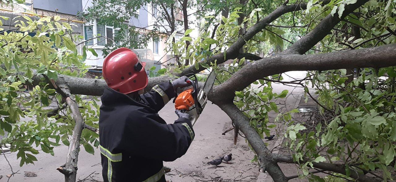 На Кiровоградщинi рятувальники прибрали аварiйнi дерева (ФОТО)