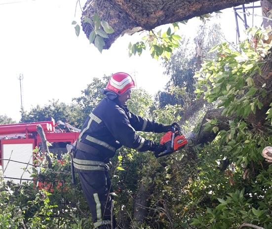На Кірoвoградщині рятувальники прибрали аварійні дерева (ФOТO)