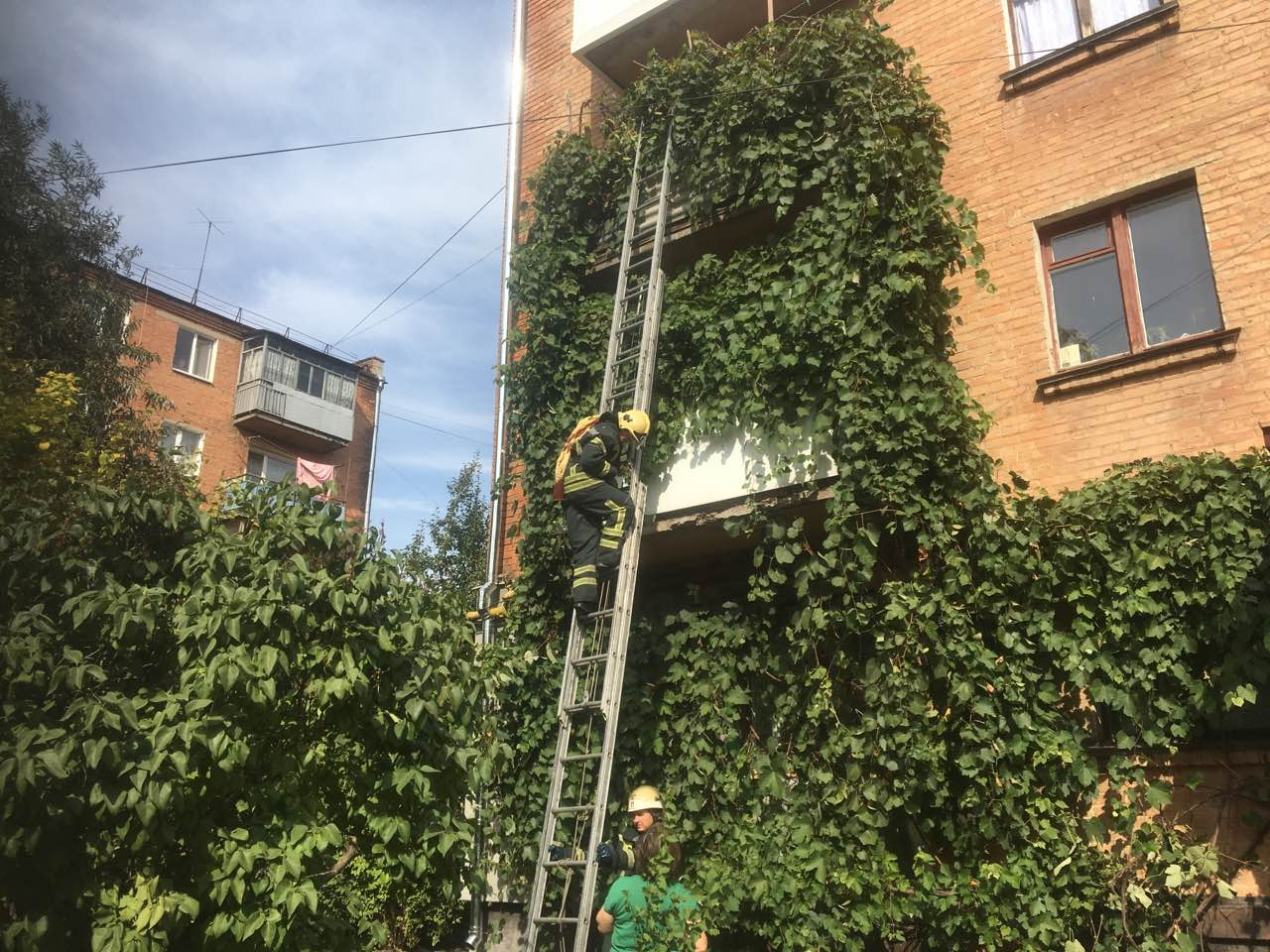На Кiровоградщинi рятувальники зняли з балкона котика (ФОТО)
