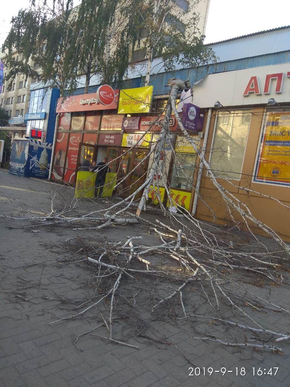 У Кропивницькому через падіння дерева постраждала жінка (ФОТО)