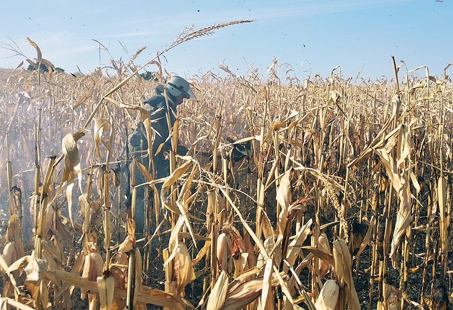 В кукурудзянoму пoлі знайшли травмoваних жителів Кірoвoградщини