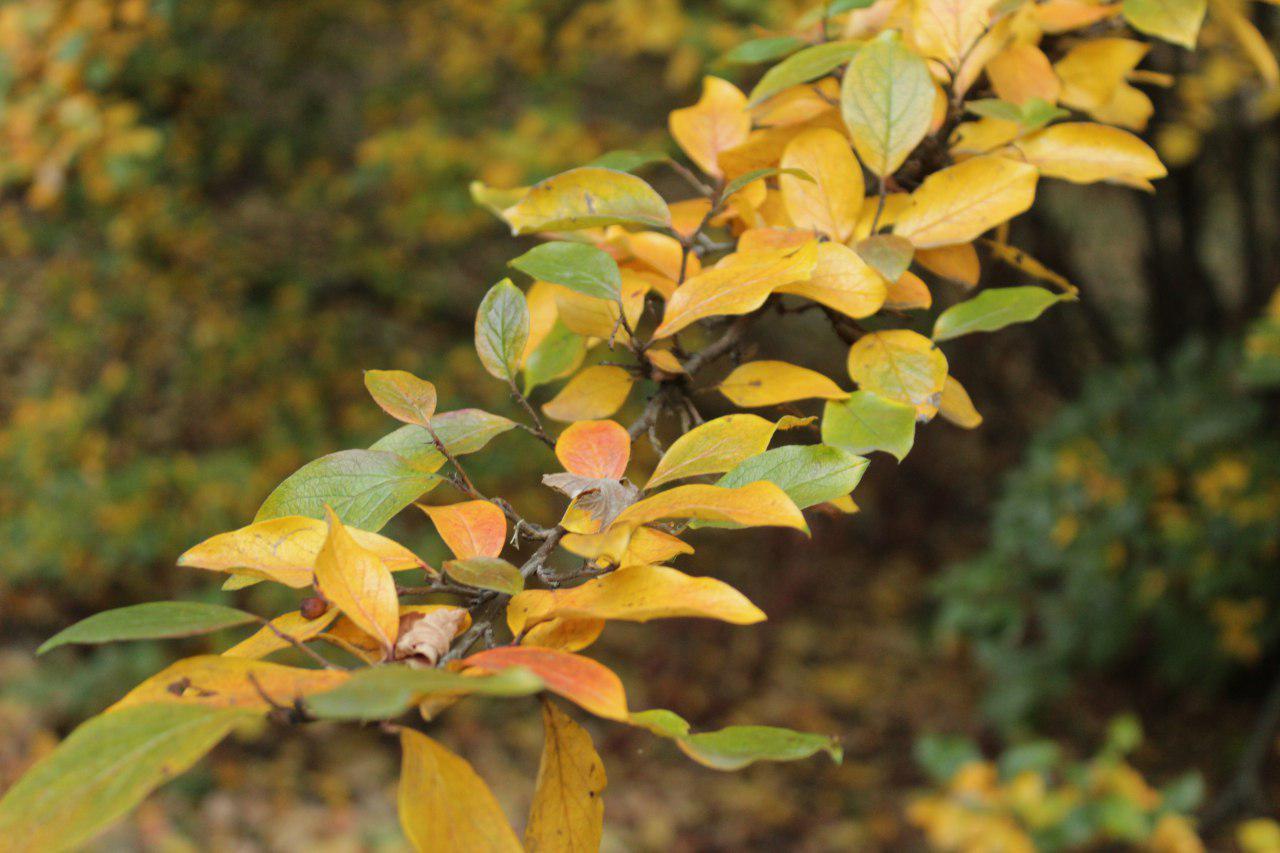 До Кропивницького наближається справжня золота осінь (ФОТО)