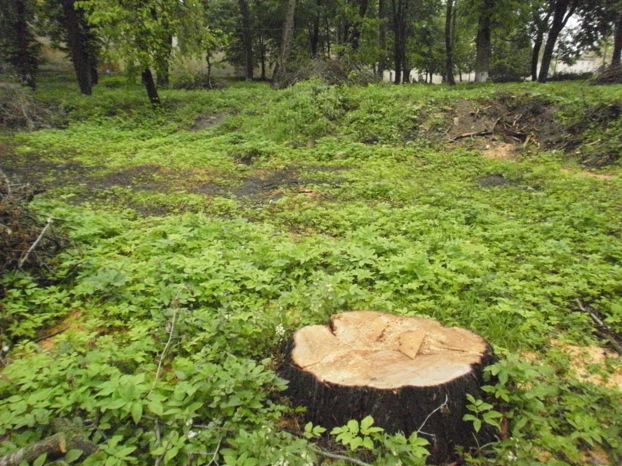 У Світловодському районі браконьєри понищили акації