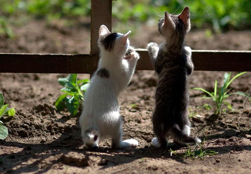 У перший день весни в Кропивницькому відбудеться свято котиків