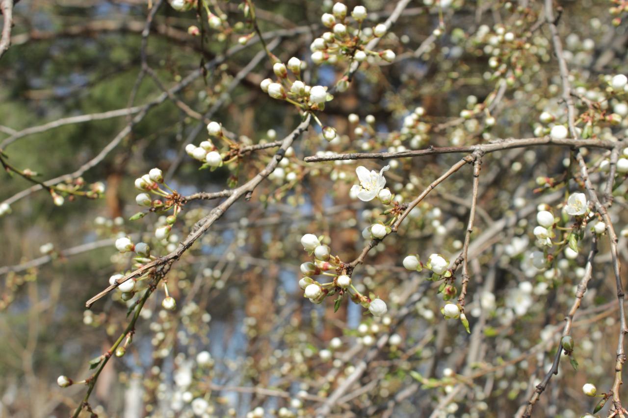 Весна в умовах карантину у Кропивницькому (ФОТОРЕПОРТАЖ)