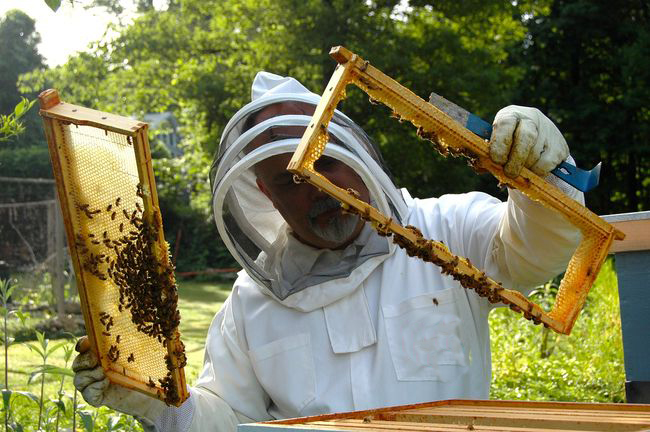 Бджолярам Кiровоградщини передбачена допомога вiд держави