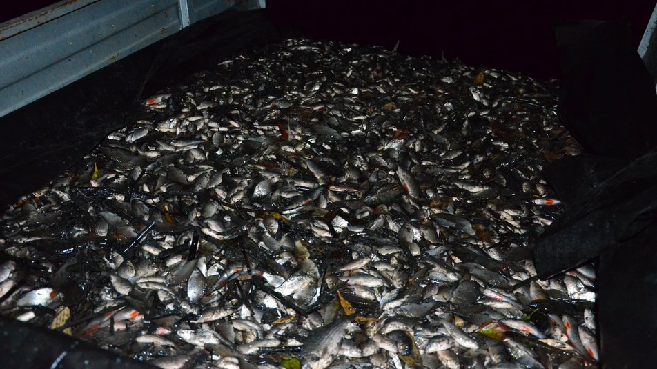 На Кiровоградщинi у ставок запустили малькiв риби (ФОТО)