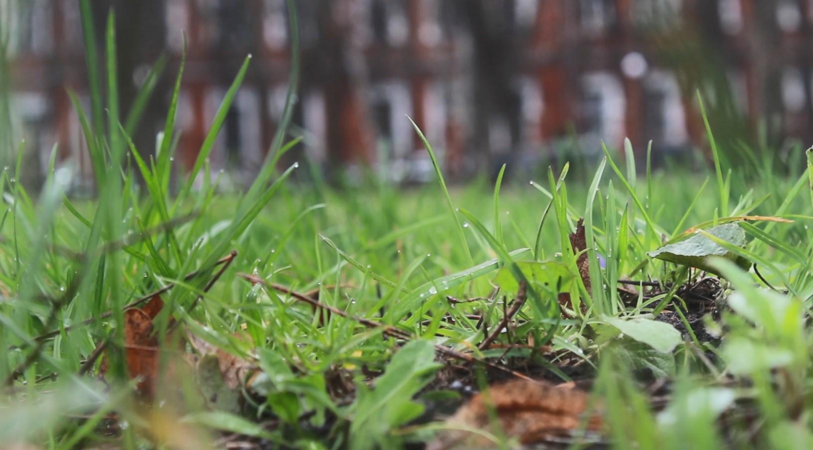 У Кропивницькому виявили кліщів зі збудниками небезпечної хвороби (ФОТО)