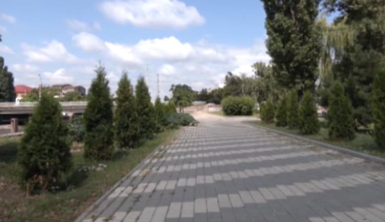 Вандали повиривали у Кропивницькому вночі дерева (ВIДЕО)