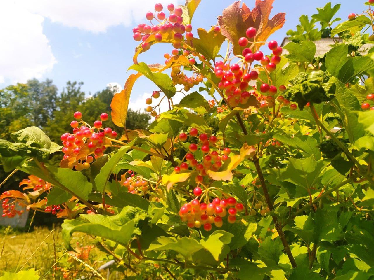 Кропивницький тішить око сонцем та квітами (ФОТО)
