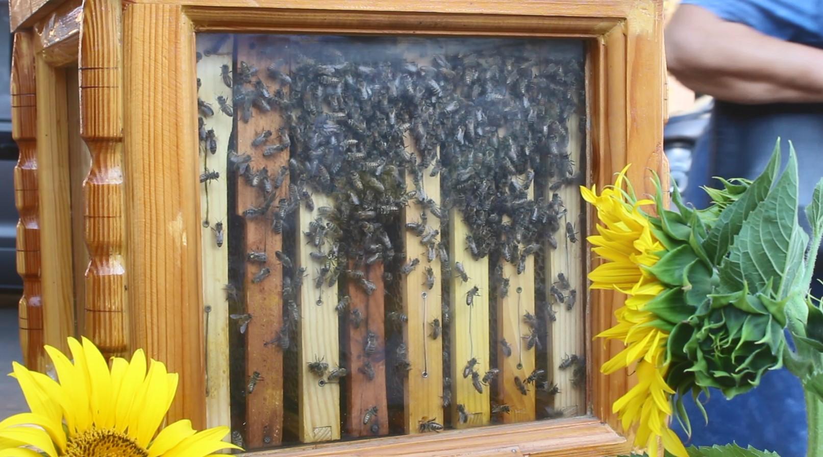 Бджолярі з Кіровоградщини розповіли про свій бізнес та який мед найкращий (ФОТО)