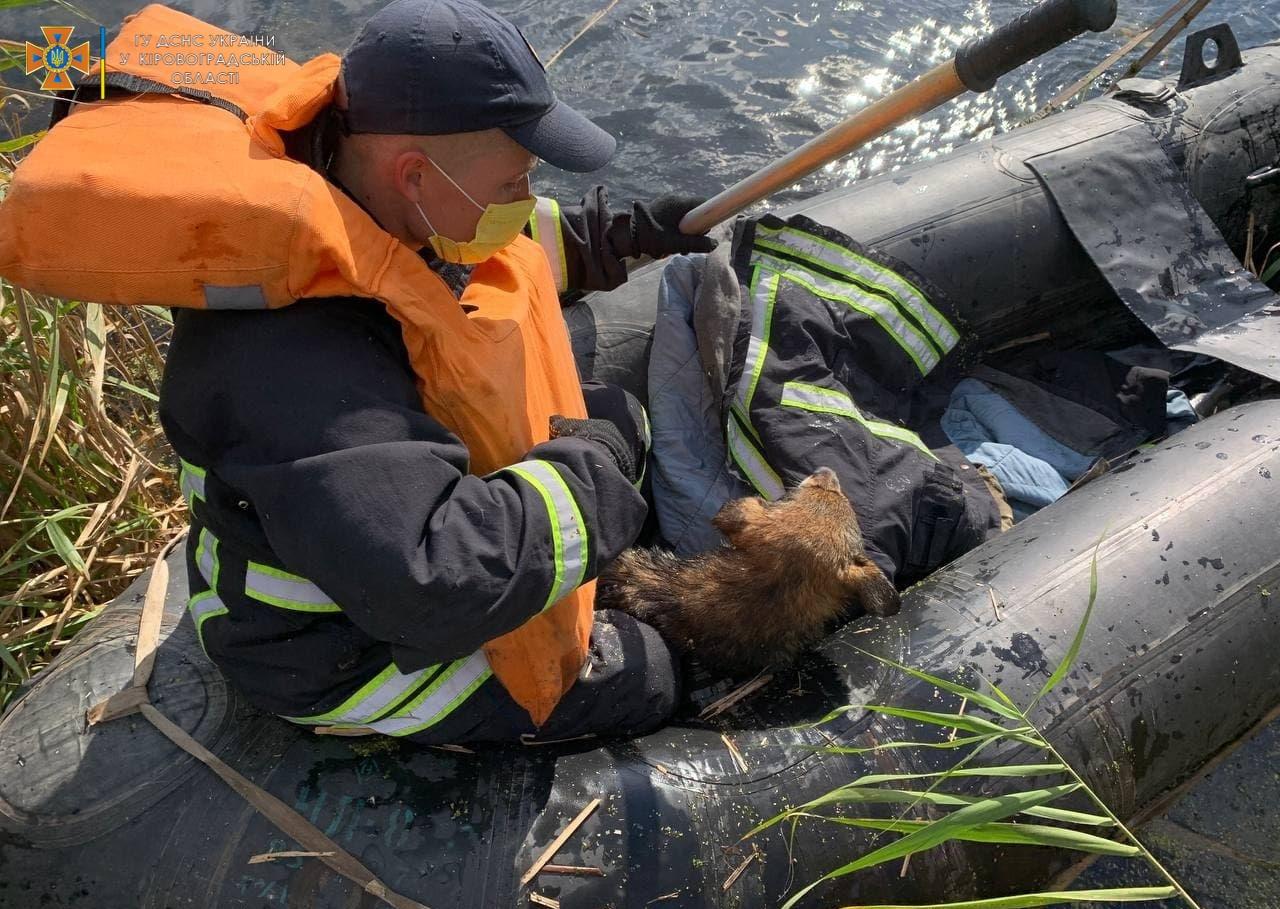 Кропивницький собака ледь не втонув у Iнгулi (ФОТО)