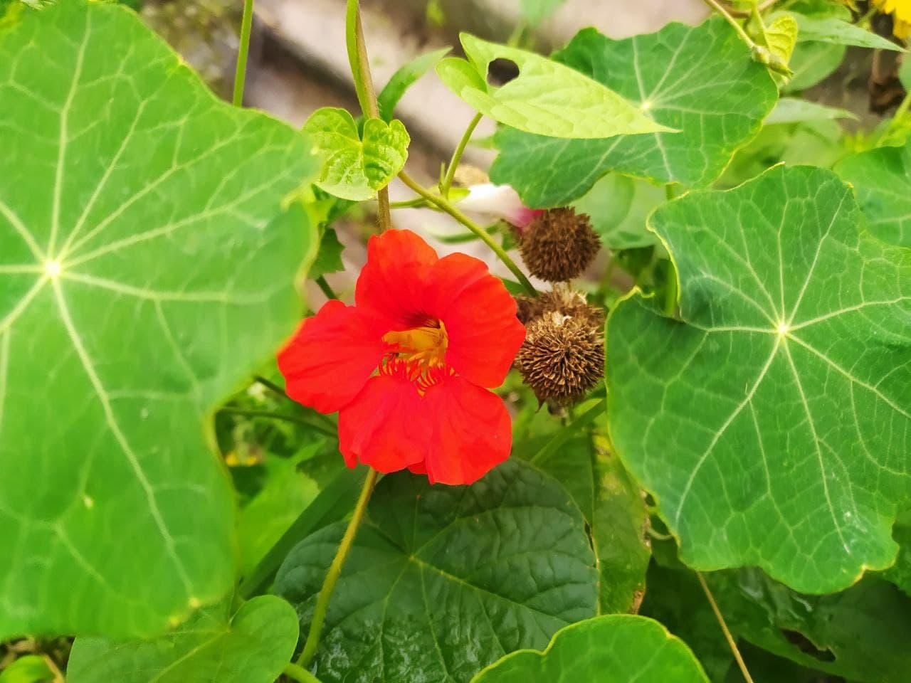 Квіти, іграшки, коти: жовтень у кропивницьких двориках (ФОТО)