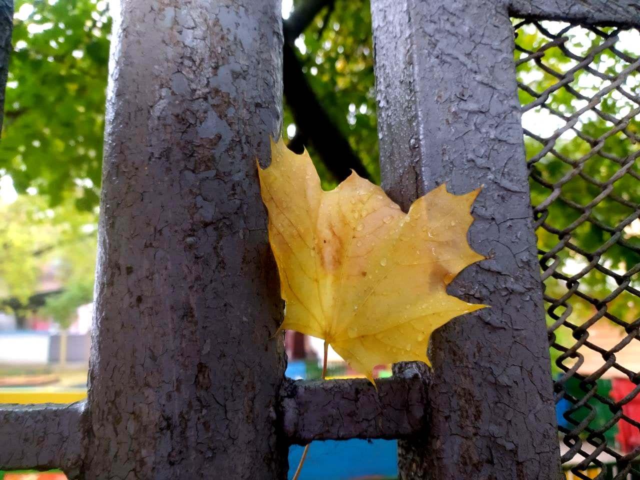 Останні історії жовтневого листя у Кропивницькому (ФОТО)